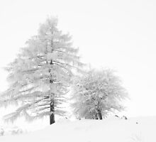 White tree I by thonycity