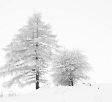 White tree I by thonycity