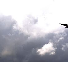 Bird v Plane by Quiet-Busker