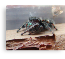 Boris the Spider or Arachnid Canvas Print