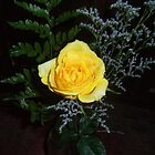 Yellow rose by debkd