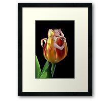 Tulip baby Framed Print