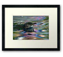 Fairy Penguin Rainbow Framed Print
