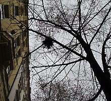 nest in a tall tree Praha 2009 by amazingulia