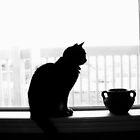 silhouette cat by bpth htpb