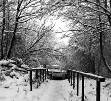 Snow Pathway by Stephen Robinson