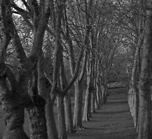 Continuous Trees by Cheriese