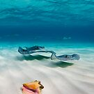 Two stingrays & a shell went into a sandbar... by muzy