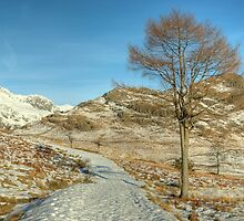 A Lakeland Path In Winter by Jamie  Green