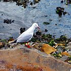 Bird on the Rocks by Angela ILIADIS