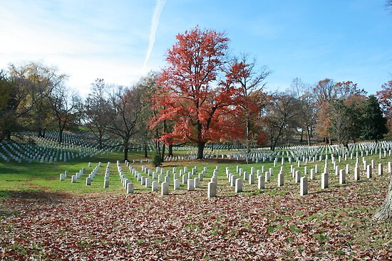Colour surrounded by the fallen - Arlington Cemetery by DanielRyan