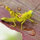 HDR Grasshopper by Jayson Gaskell