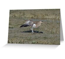 Curlew 02 Greeting Card