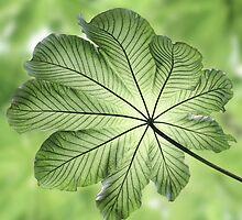 Green Canopy by John Edwards