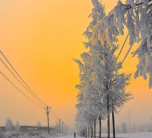 Promising morning by Veikko  Suikkanen