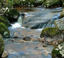 Woodland water at Glencree No3 by Martina Fagan