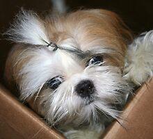 Lola in a box.  by Alexandra Wise-Brogna