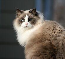 Meow by Marija