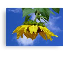 Giant Sunflower Canvas Print