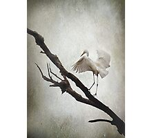 The Tightrope Photographic Print
