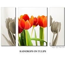 Raindrops on tulips by vitocork