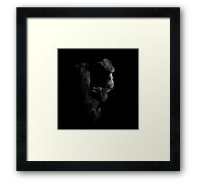 Primate Portraits ~ Part One Framed Print