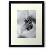 Look at Me ©  Framed Print