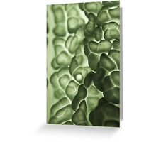 Macro of a savoy cabbage Greeting Card
