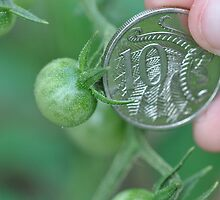 Baby Tomato And A 10c Coin by MissyD