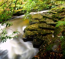 Clare Glens Co. Tipperary  by Lean