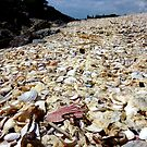 Shell Deposition Zone, New Zealand by Keith Richardson