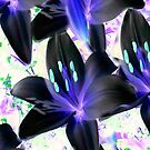 Lovely In Black...  Inverted Lilys  by MaeBelle