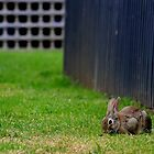 Solitary Rabbit by Zac Damiani