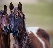 PASTURE PALS by Kathy Cline