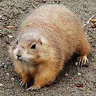 Prairie Dog by James  Birkbeck Animals