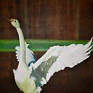 The Swan by gunnelau