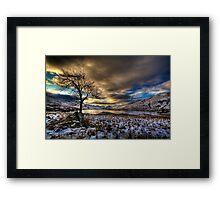 Arklet Tree (2) Framed Print