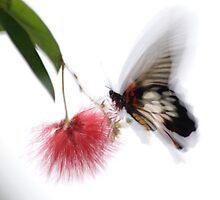 Flutter of Colour by Julian MacDonald