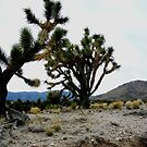 Mr. and Mrs. Joshua Tree.. by ThomHull