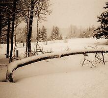 Mourning in Winter #1 (Fallen Tree) (Breadalbane, Prince Edward Island, Canada, December 2008) by Edward A. Lentz