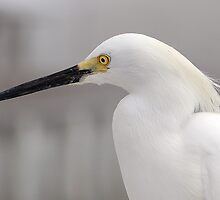 My Fine Feathered Friend by Ralph Angelillo