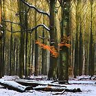 Magic Winter Forest by LarsvandeGoor