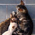 Gatinhos Mamando!!!<>Kittens Ball! by Gilberto Grecco