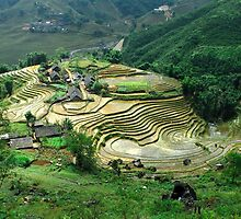 Rice Paddies, Sapa, Vietnam by StottScape