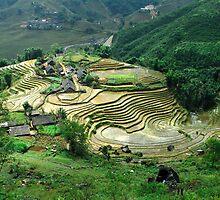 Rice Paddies, Sapa, Vietnam by StottScape