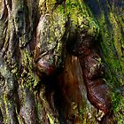 Redwood Bark by Zane Paxton