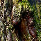 Redwood Bark by Zane Paxton