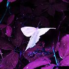 White Butterfly by shutter-bug1