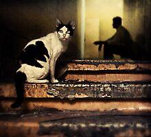 The Street Cat #0101 by Michiel de Lange