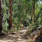 Newcomb Spur Track,Otway Ranges. by Joe Mortelliti